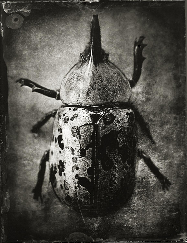 Beetle - By: Gary Geboy  www.garygeboyphotography.com