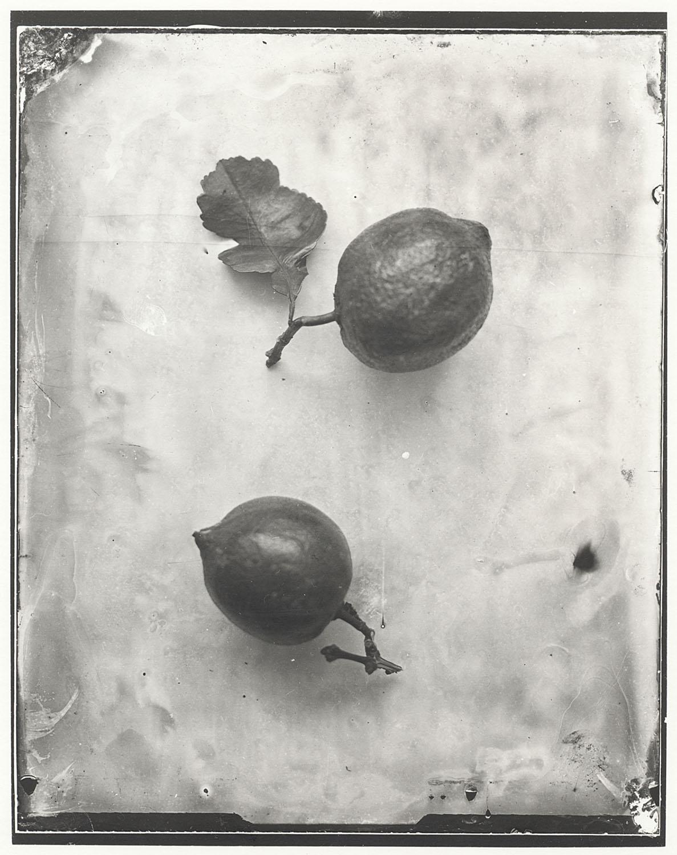 Lemons - By:Emilija Petrauskiene
