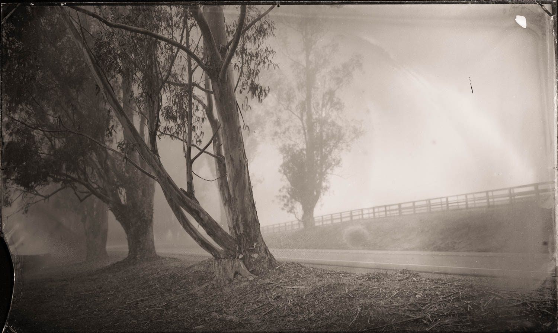 Eucalyptus in Fog, California - By:Christopher Erin  www.christophererin.com