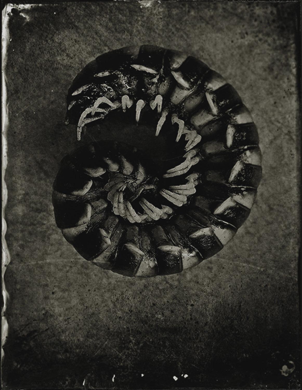 Centipede - By: Gary Geboy  www.garygeboyphotography.com