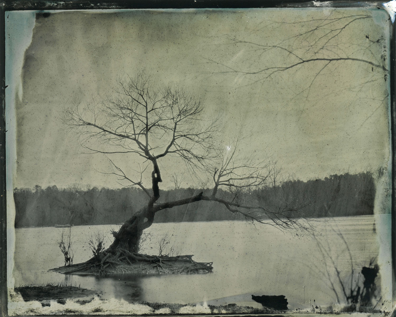 Tree Skeleton - By: Emily White  emwhitephoto.com