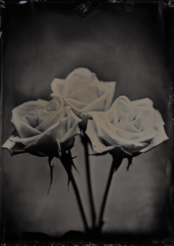 Tres Rosas 2.19.18 - By:Michael Marano  www.973studio.com