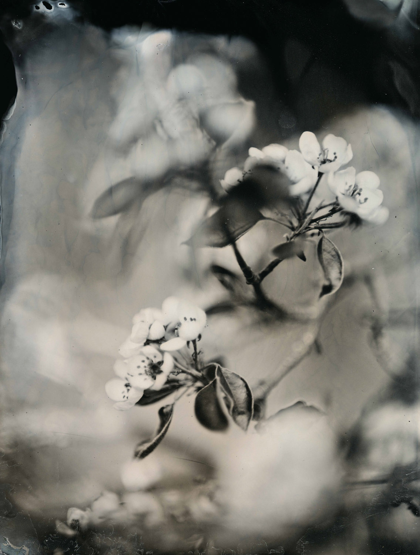 Sring - By:Gabriel Kiss