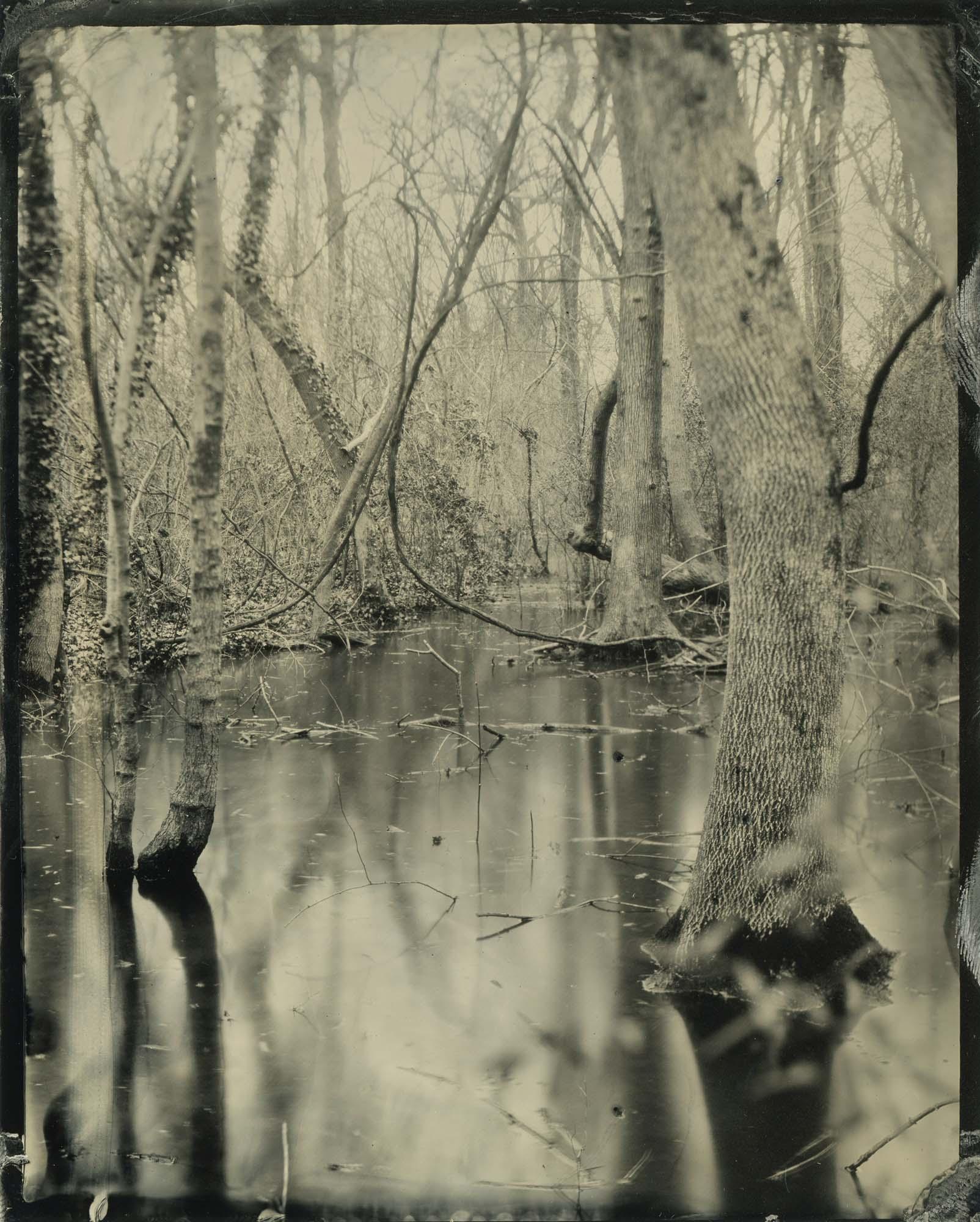 Title : Untitled Swamp By: Emily White    www.emwhitephoto.com