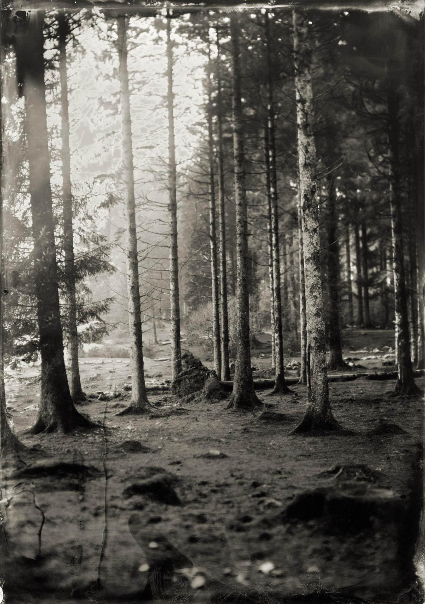 Title : Bellever Forest By: Jemma Ridyard    www.instagram.com/jemmaridyard