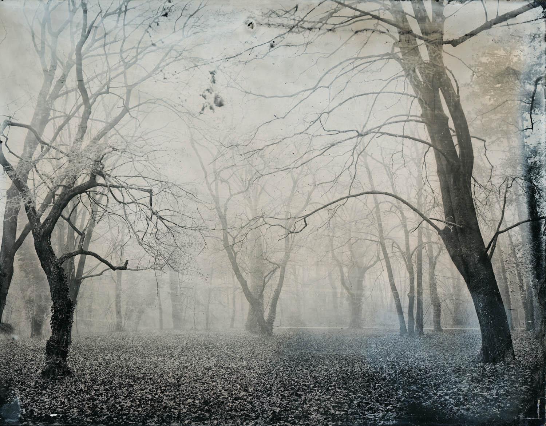 Title : Mist  By:  Gabriel Kiss  www.gibboart.sk