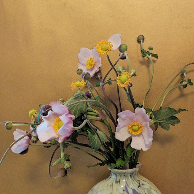Beautiful fall blooming anemones spotted at my local flower shop here in Alameda @dandelionflowers Thought maybe they were Japanese anemones but now I'm not so sure. Either way, a wonderful way to cheer up this drizzling weekend.