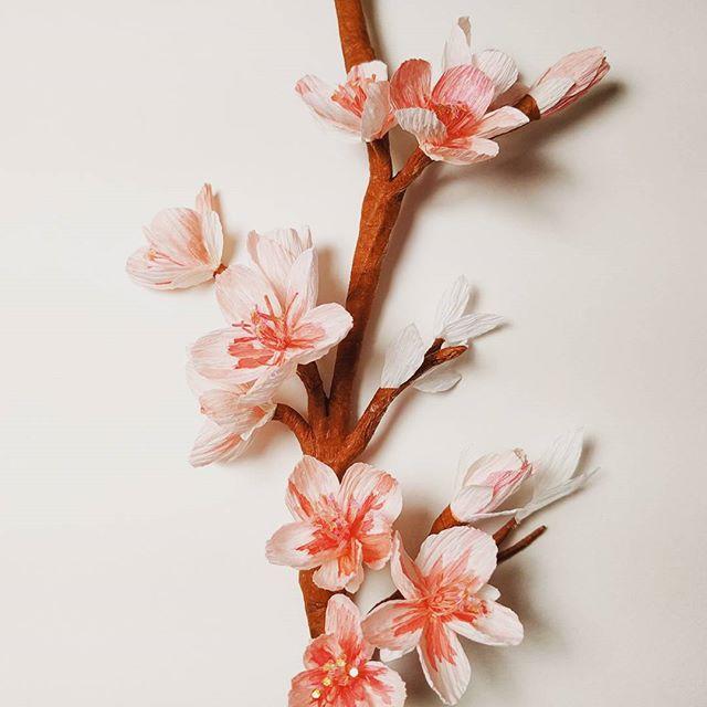 Cherry blossoms in November