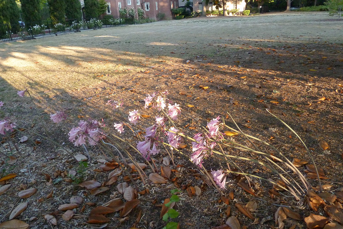 Pink flowers on long stems