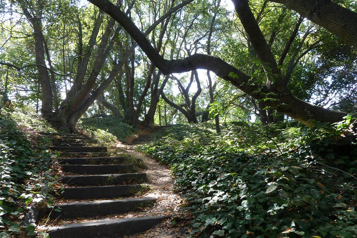Path steps