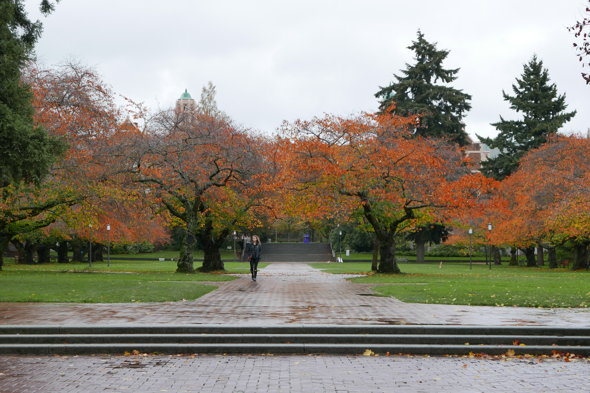 Campus tree and student