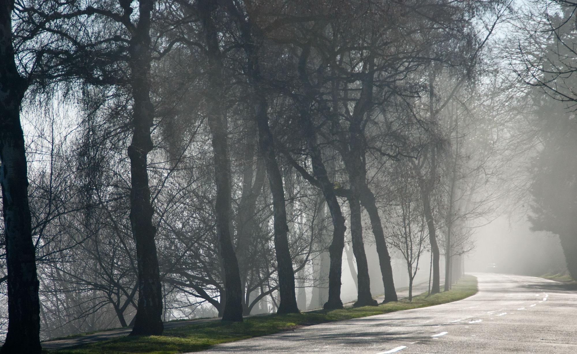 winter pacific fog