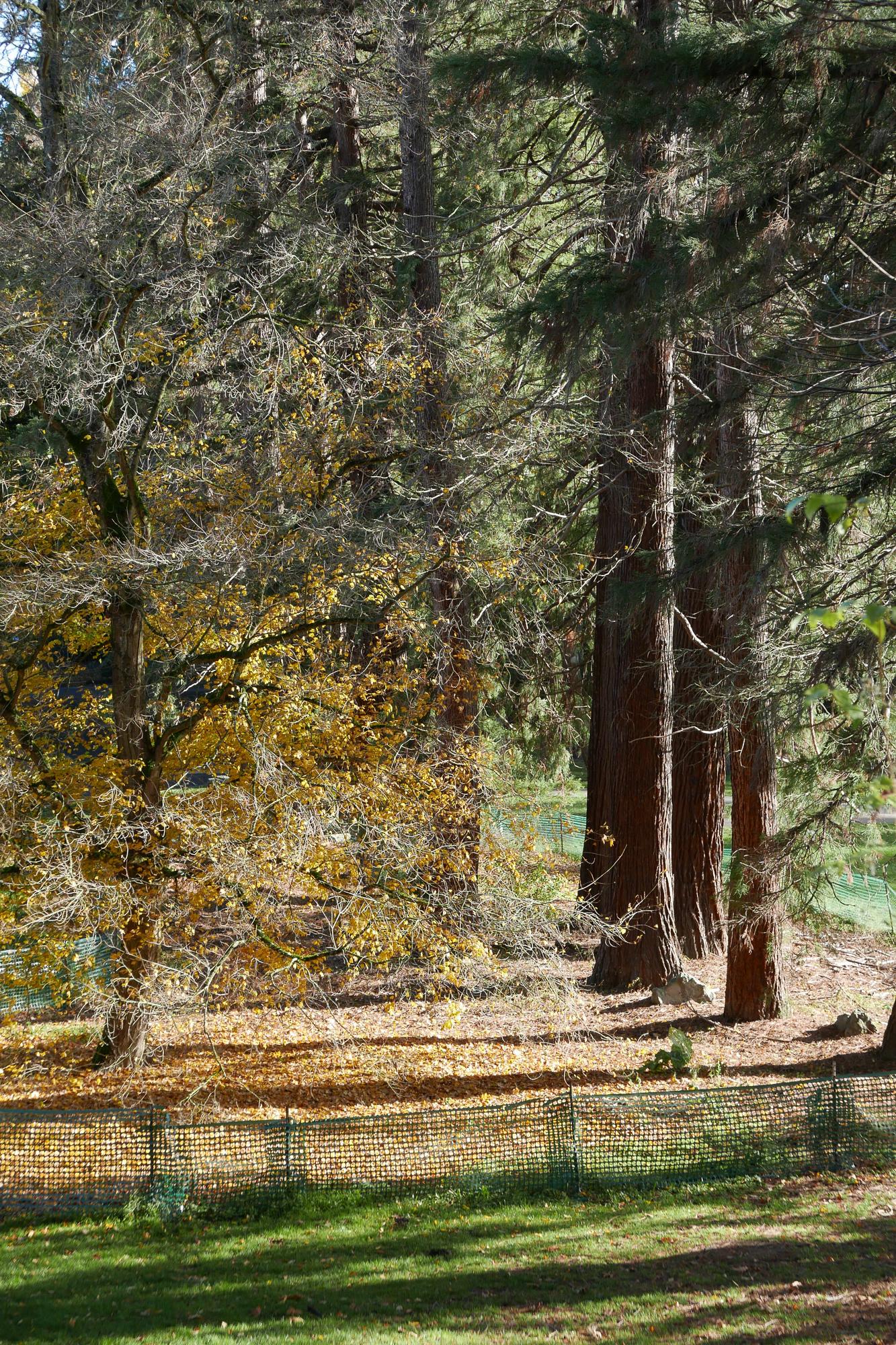redwoods, Washington Park