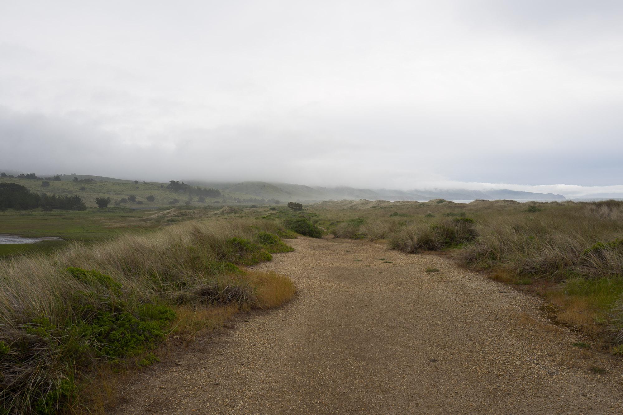 seashore scrublands