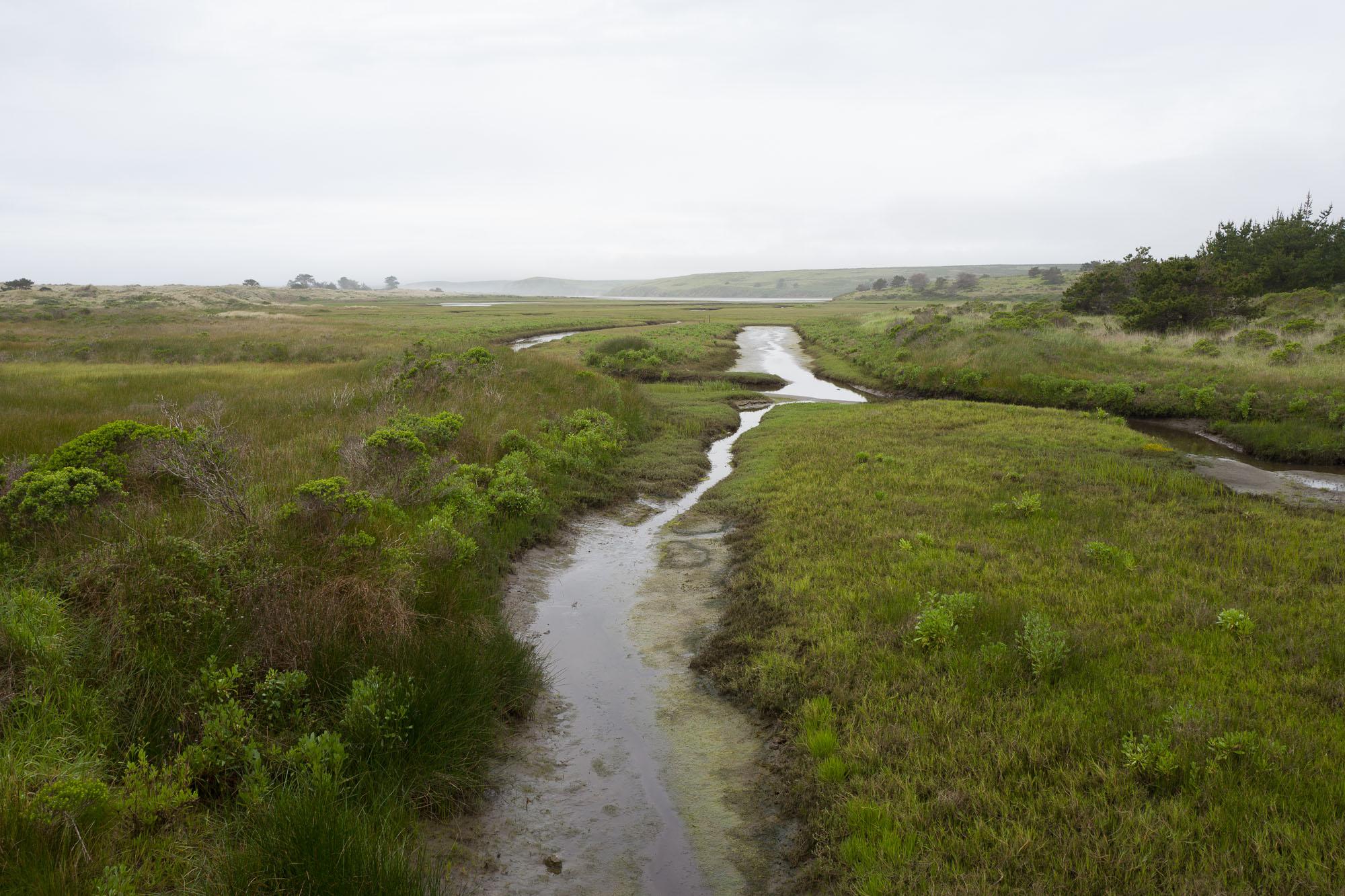Estero de Limantour