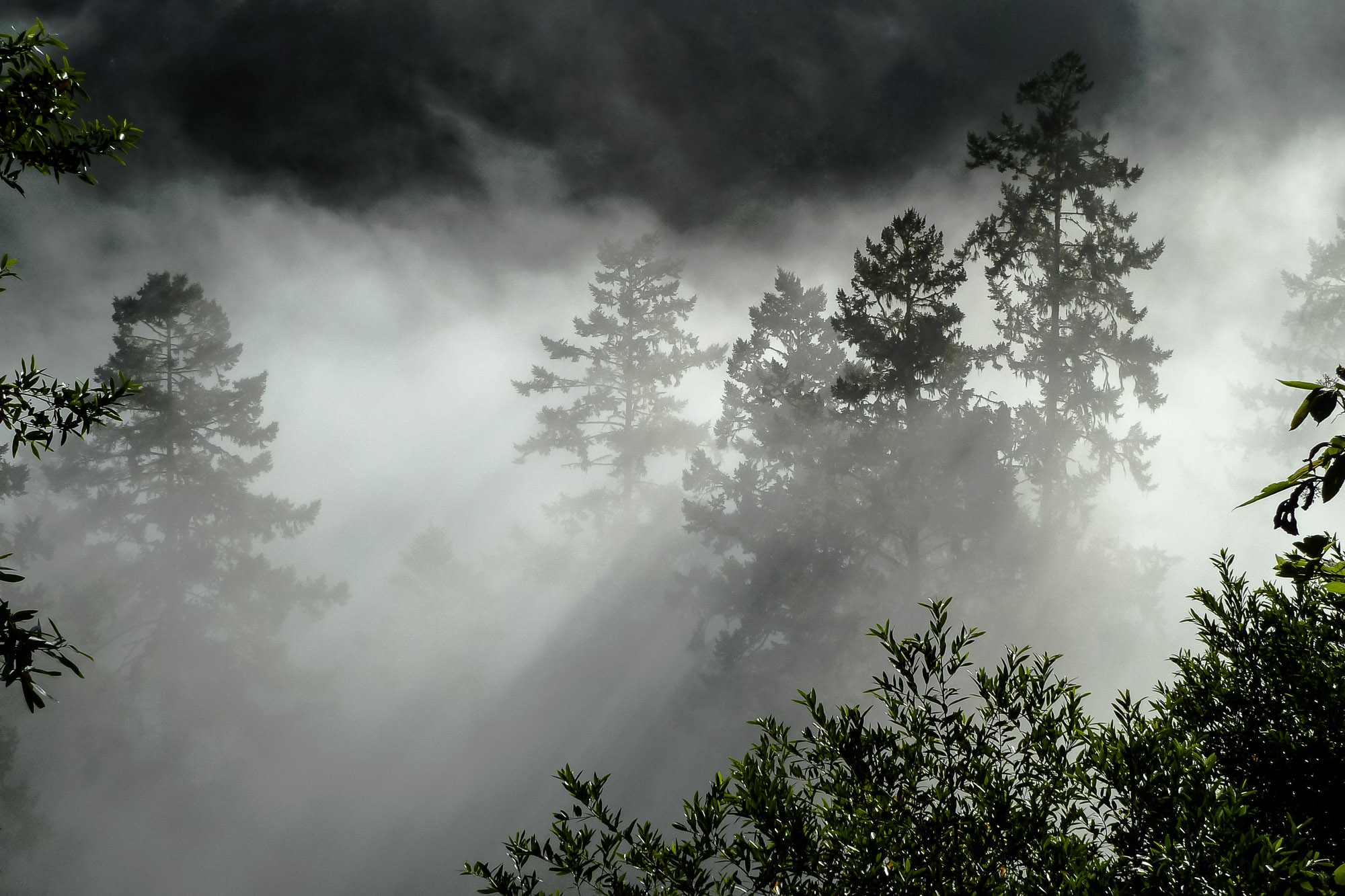 morning fog and sun