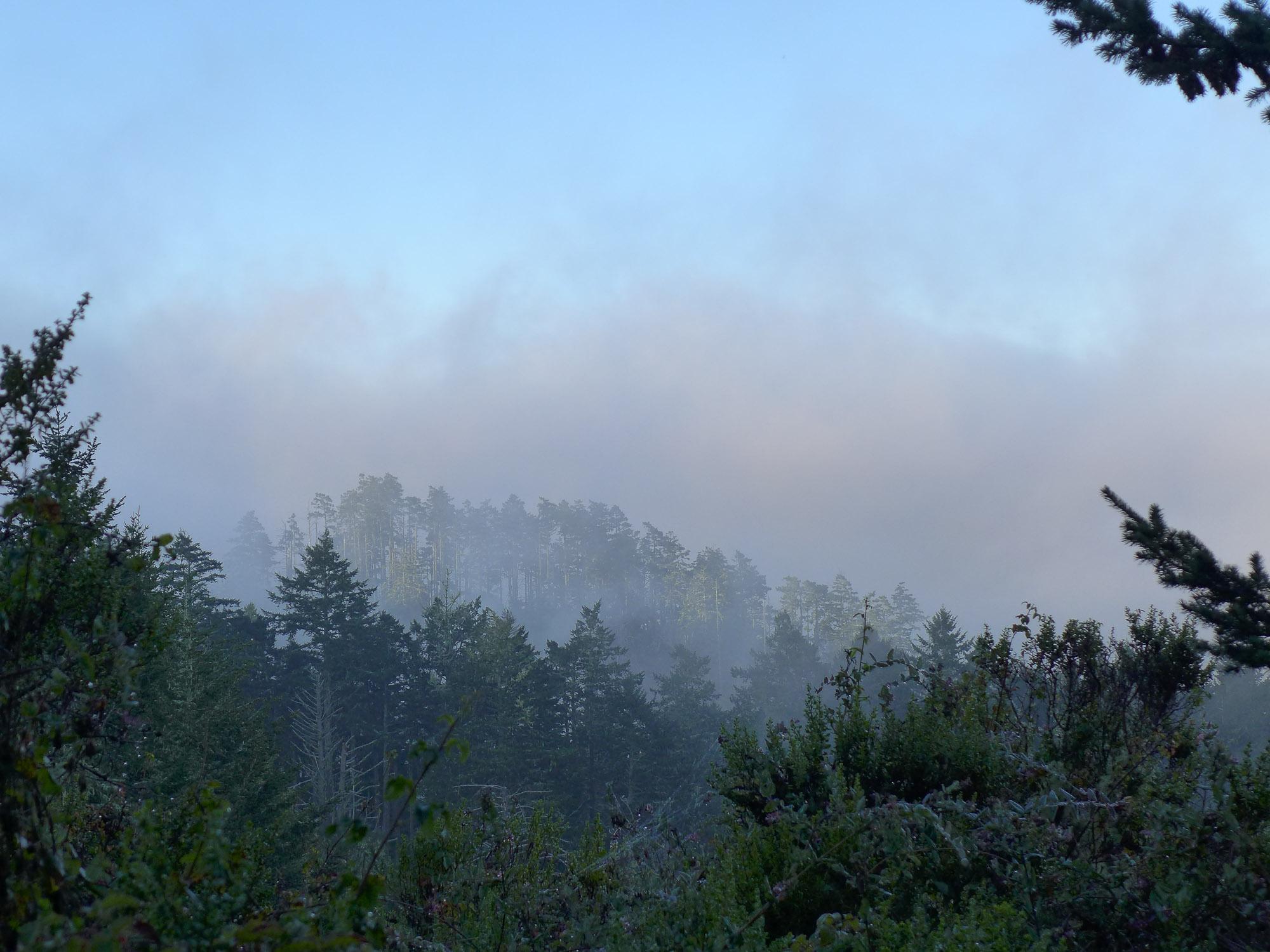 fog lift