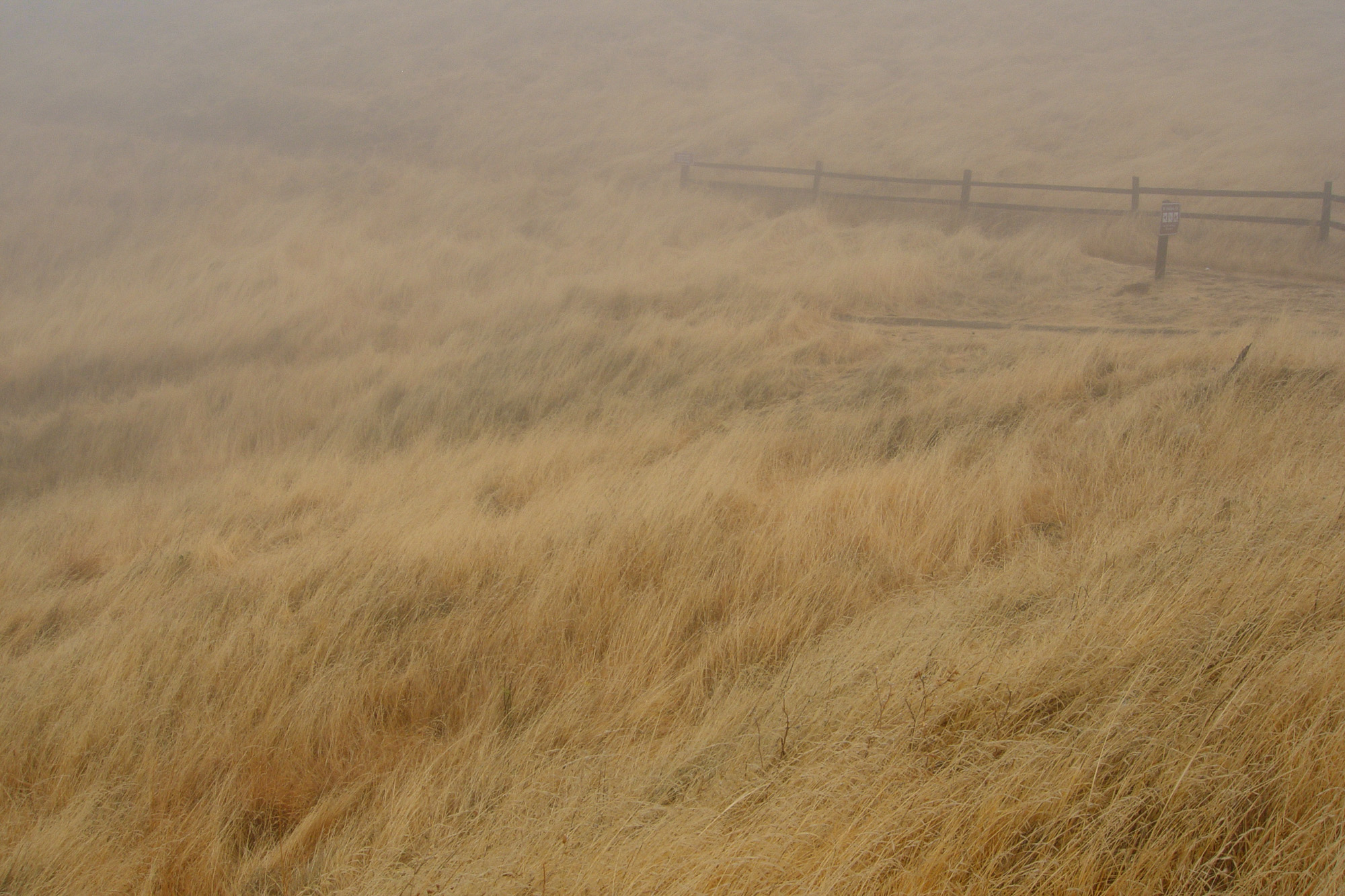 grasslands and fog