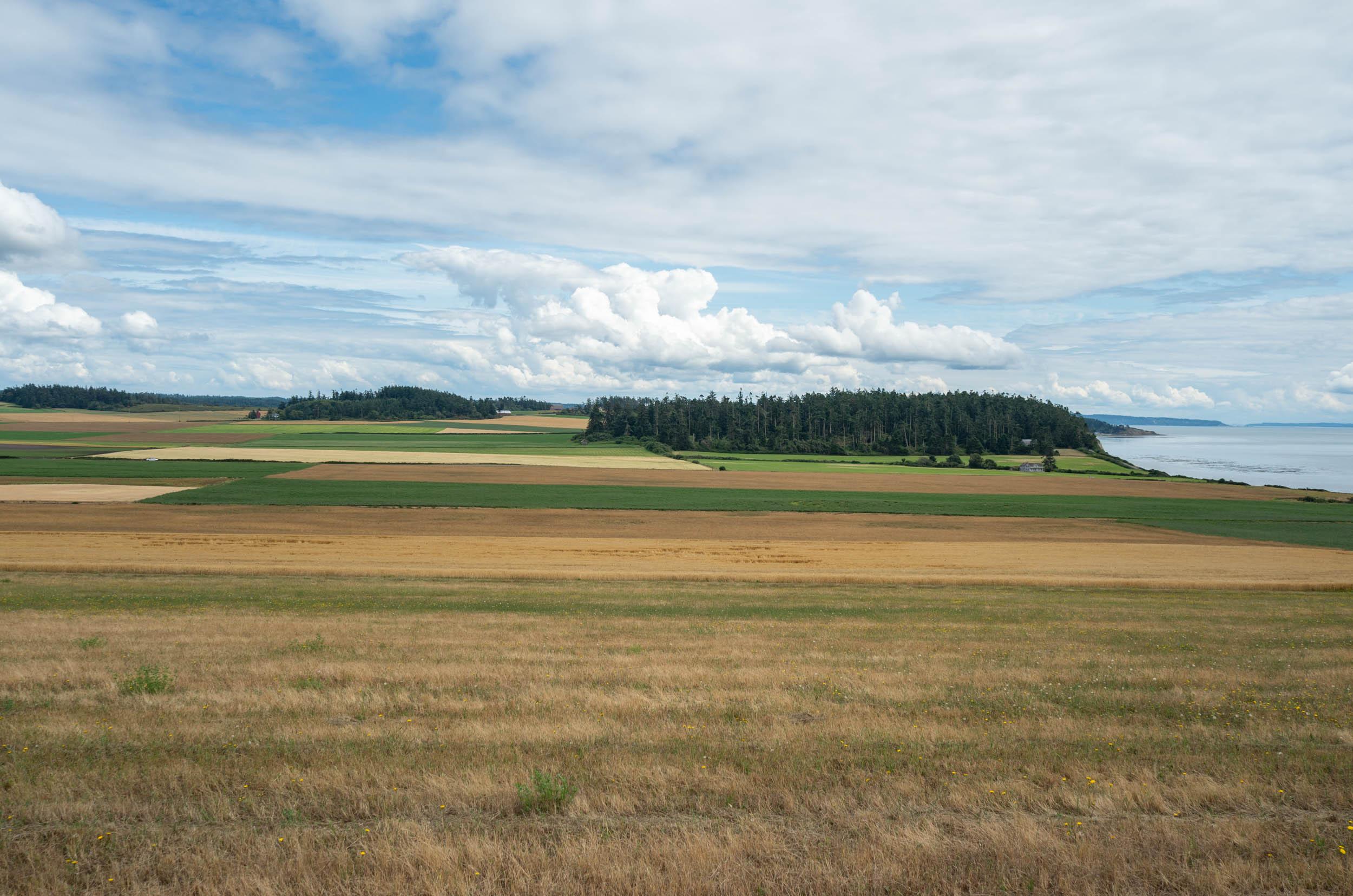 Whidbey farm