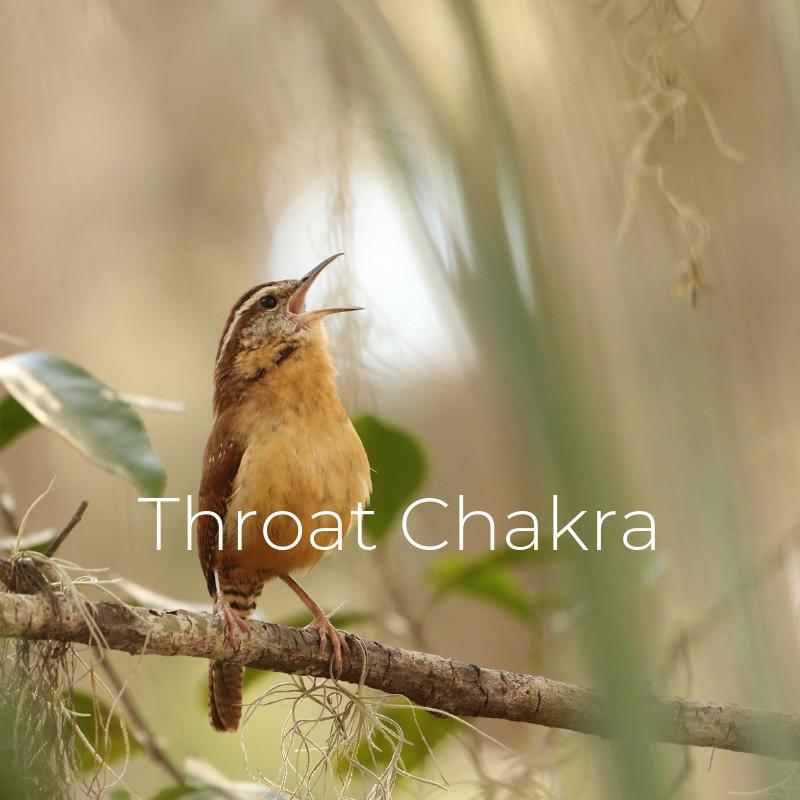 Throat Chakra.png
