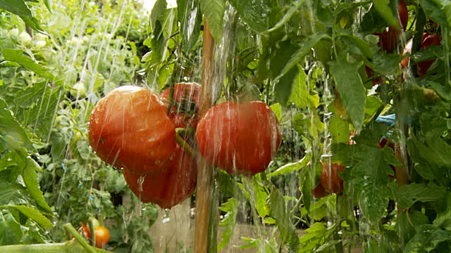 Veggies love the rain!!