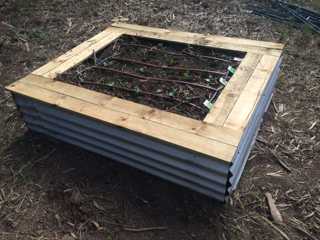 Upcycled Zinc veggie patch planted