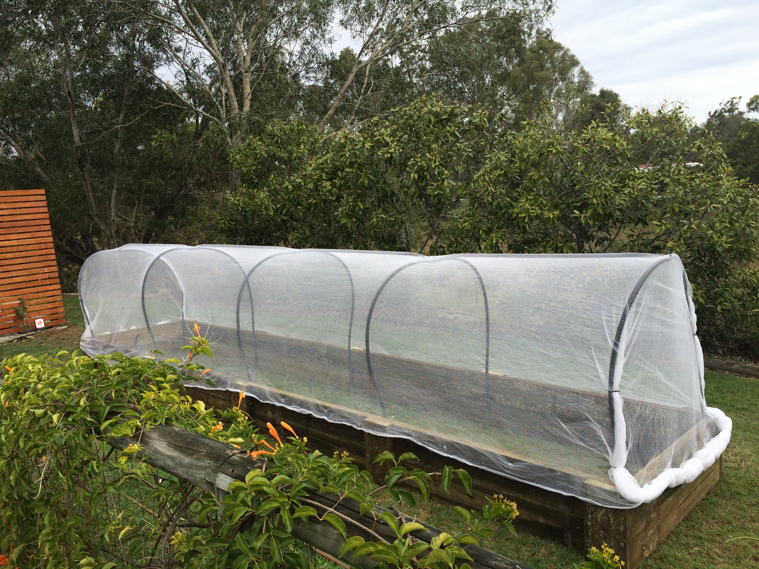 Imagine all the veggies you can grow in here!
