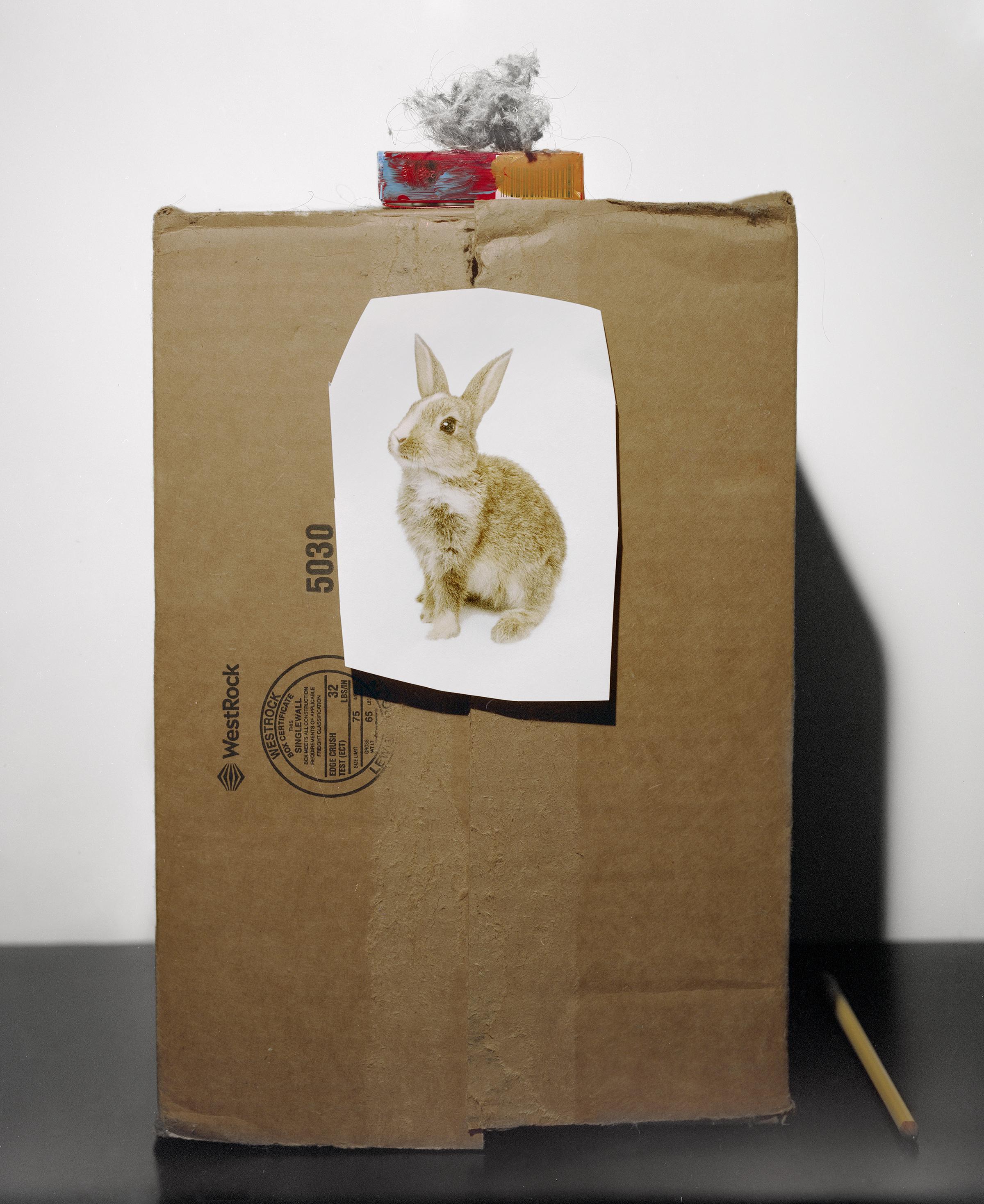 Dust_Bunny.jpg