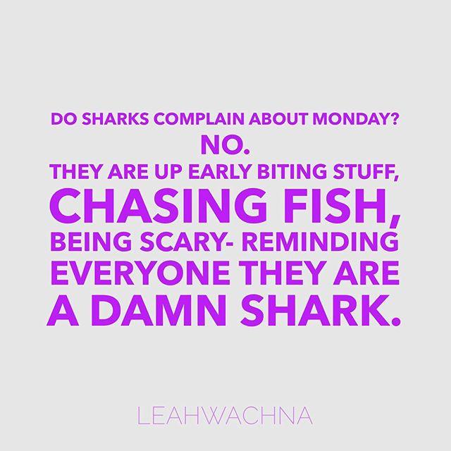 Go be a shark today 🦈 #motivationmonday