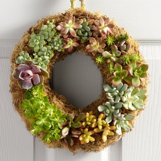 Live Succulent Wreath.jpg