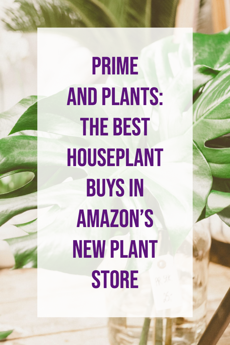 Prime and Plants: The Best Houseplant Buys in Amazon's New Plant Store