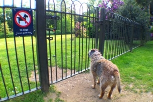 Picnic Area Fencing - We recognise that not everyone is a dog lover, so we helped pay for the fencing around the dog-free picnic area of the park.