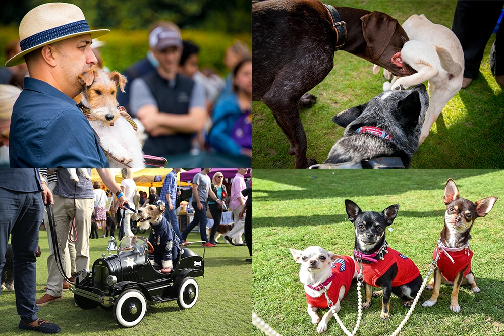 And the Photo Winners for 2017 are... - Best canine picture - Teresa KeohaneHumour - John EsslingerCapture the spirit of Chiswick House Dog Show - Cristina UlessiDogs who look like their owners - John Esslinger The judges commented as follows:Best Canine: The combination of differing expressions, coat colours and positions makes this a winning photo that demonstrates excellent composition. Echo's of the three monkeys come to mind. The brown chihuahua on the right is the real star of the scene… and he/she clearly knows it!Humour: This was the stand out winner of the Humour category. A three way sniff feast at the 'backend' of this particularly laid back dog is made even funnier by the obvious enthusiasm of the brown dog.Dogs that look like their owner: Lovely composition, depth of field and unusual side angle. We think that the similarities are all in the nose!Capturing the spirit: This photo is a clear demonstration of the massive effort and creativity that goes into the Fancy Dress category which is always a huge crowd pleaser. The featured dog has such a happy expression on his/her face that dressing up as an old fashioned policeman is obviously all part of the fun.