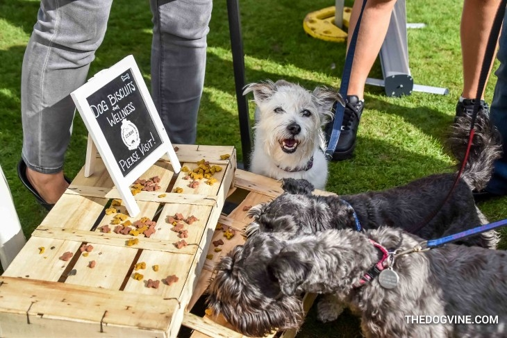 Celebrating All Things Dog - Super dogspotting photos from The Dogvine at the 2017 show:http://thedogvine.com/celebrating-all-things-dog-at-the-chiswick-house-dog-show-2017/