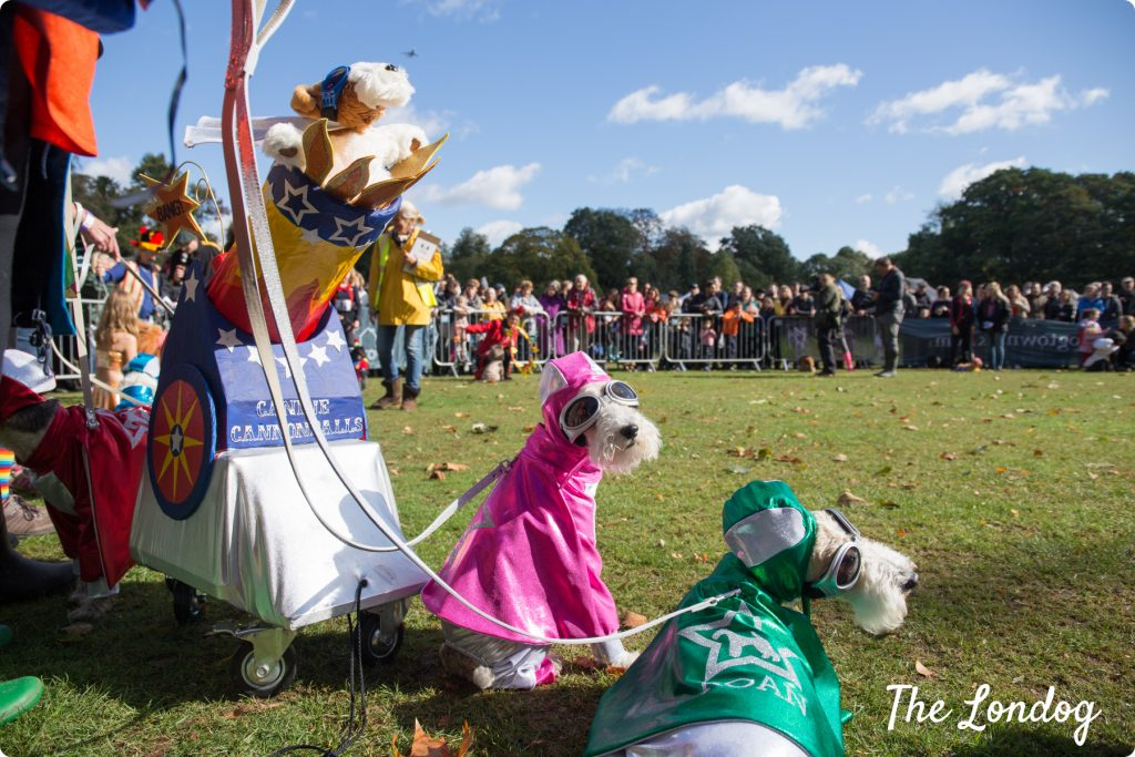 Rain and shine for Chiswick House Dog Show 2018 | The Londog - Click here to check out coverage of the 2018 show by The Londog.