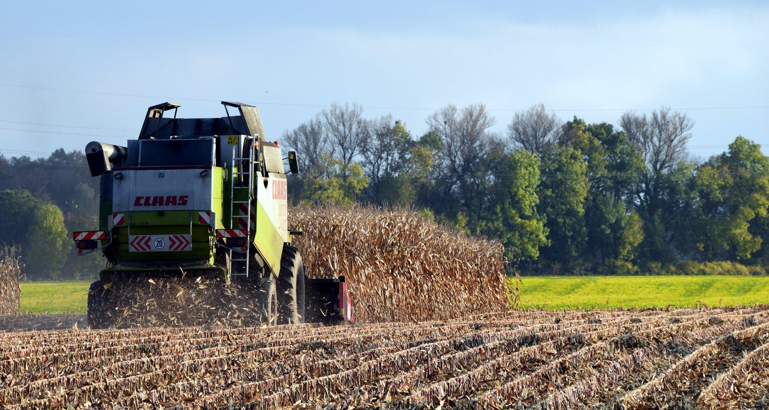 harvest-1784238.jpg