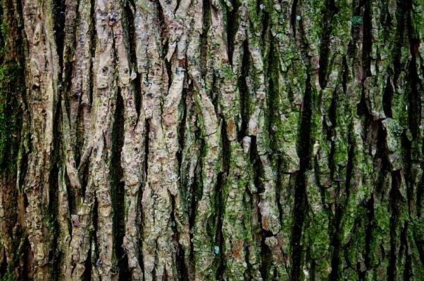 Treetrunk.jpg