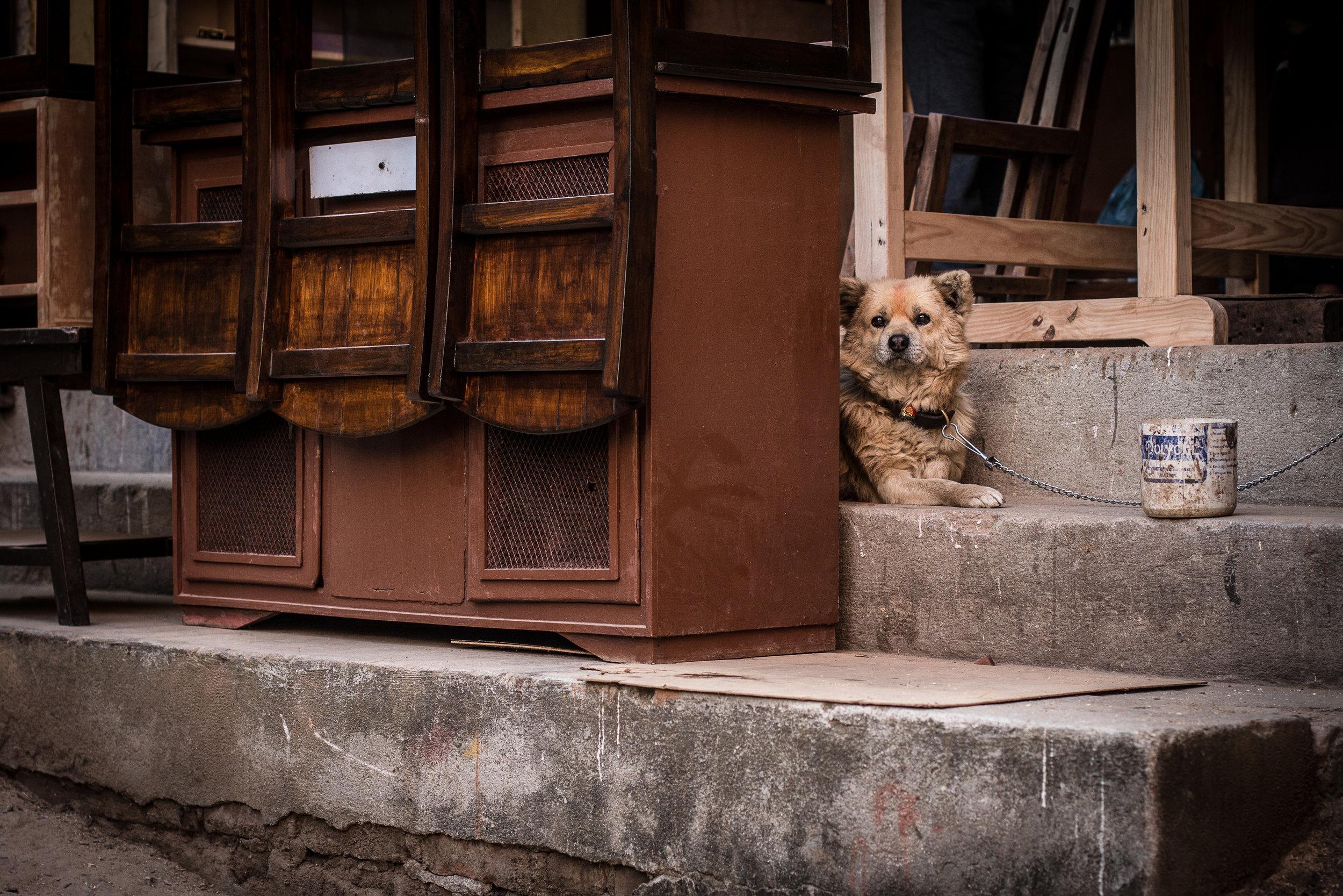 Kathmandu oli täynnä kaikenlaisia koiria - tässä harvinainen jonkun omistuksessa oleva sellainen.