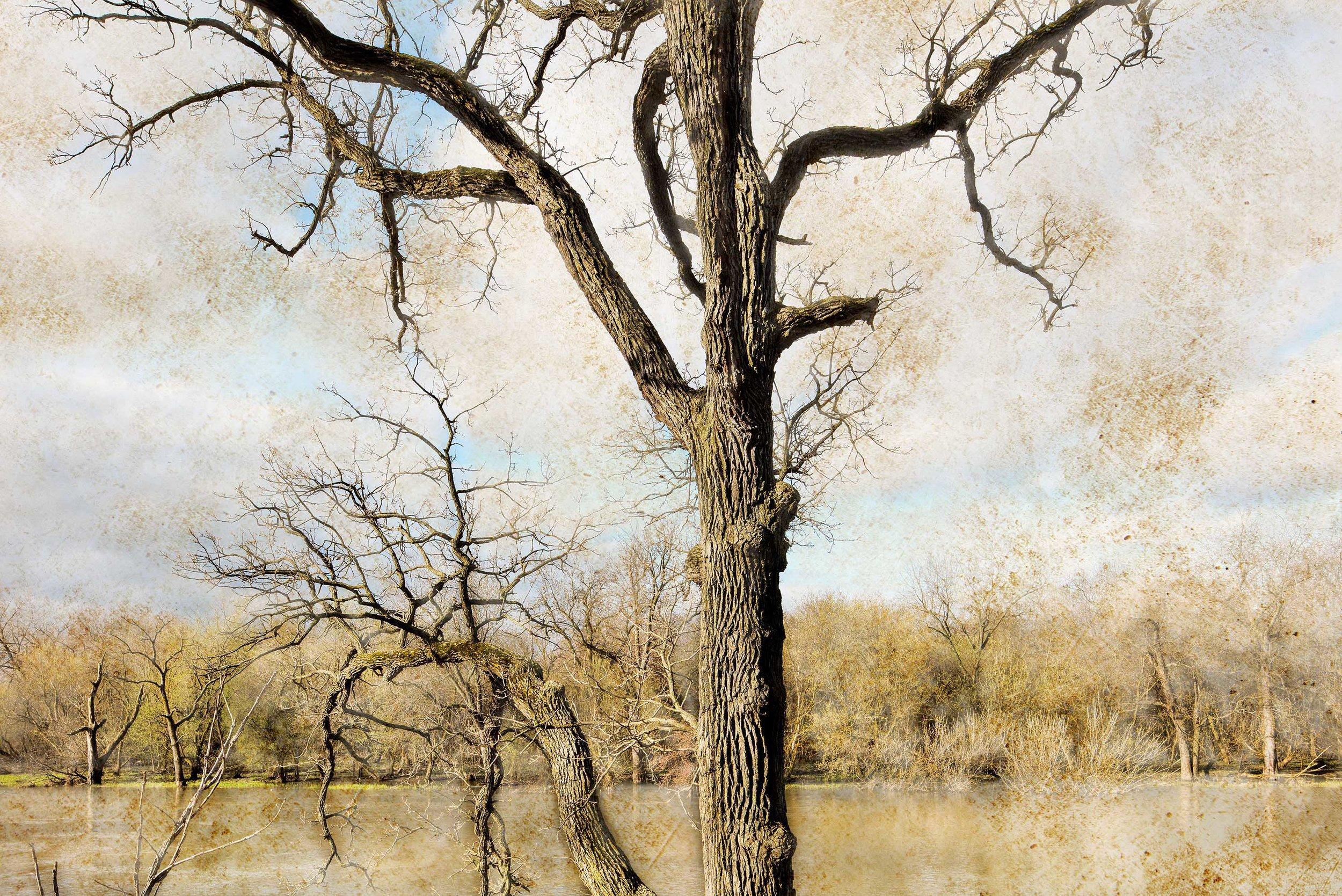 Des Plaines River 7.jpg