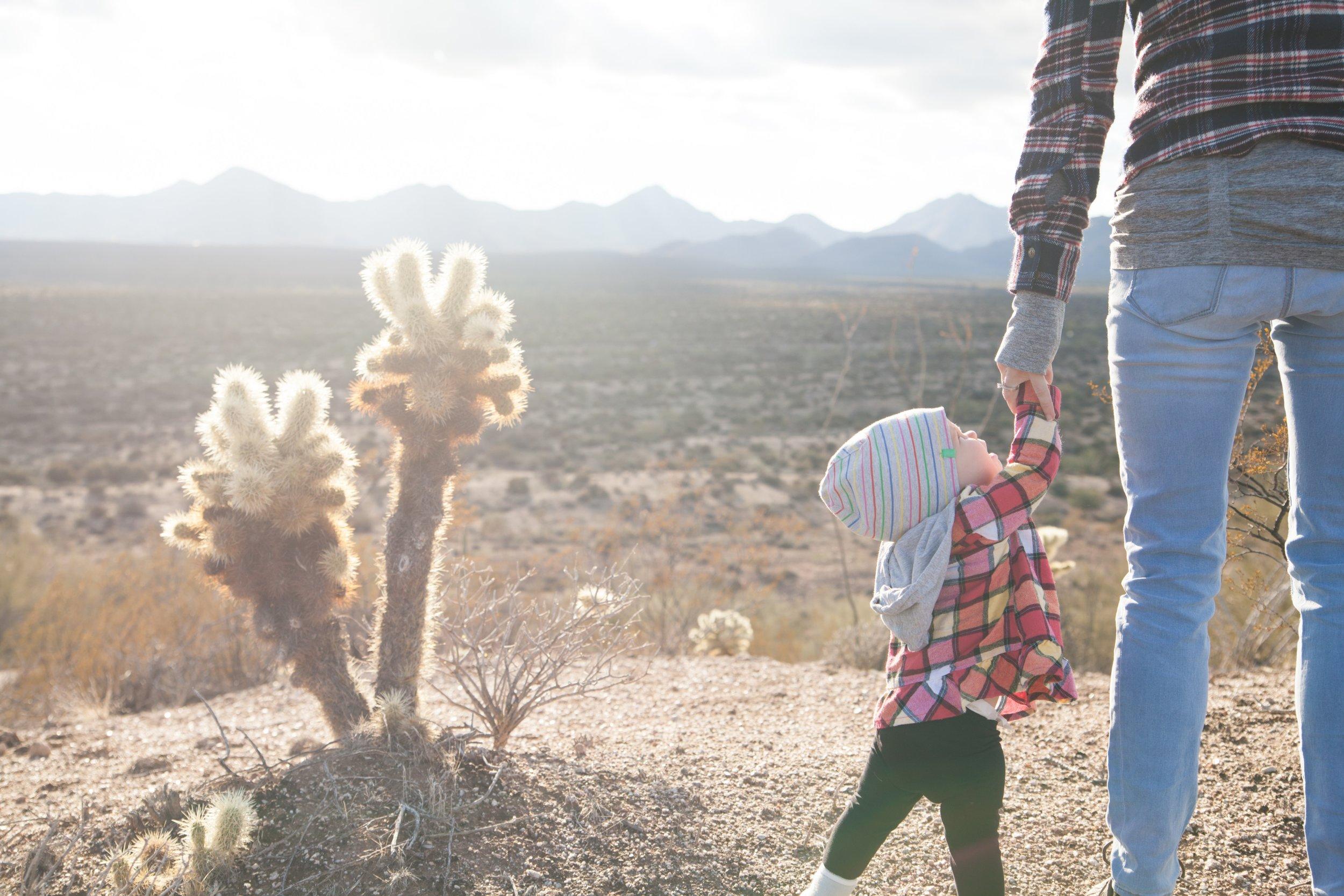 baby-cactus-child-69100.jpg
