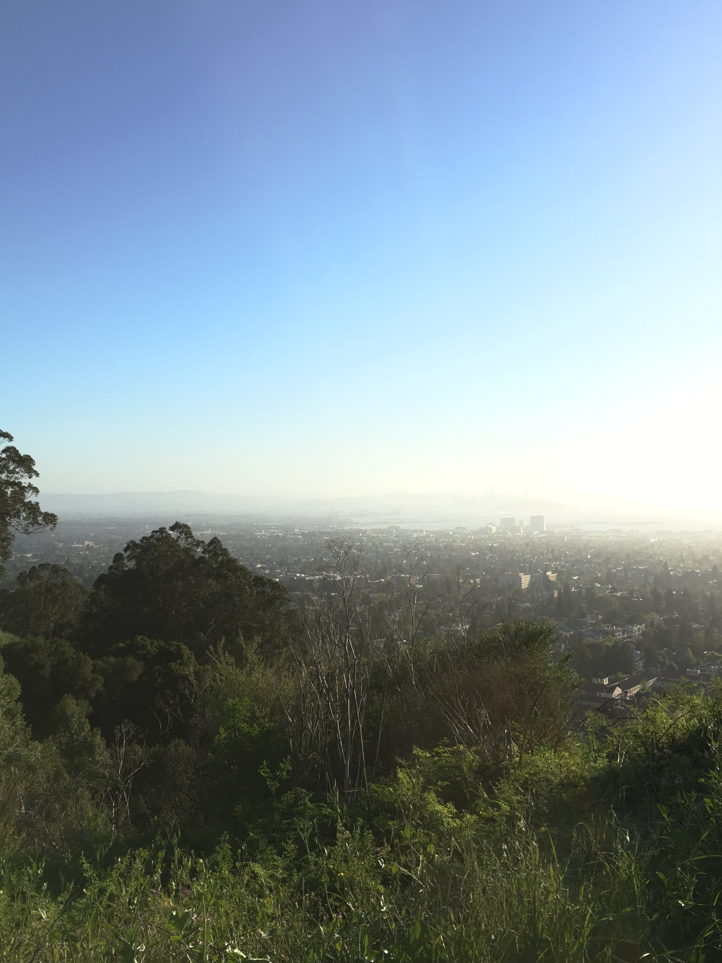 View YESTERDAY, atop Berkeley Hills. San Francisco out there, thru the light fog. Sun setting. It took 5,000 steps/50+ flight of stairs to get to this vista.