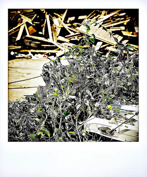 A highly filtered photo of a pile of dead shrubbery in the foreground with a pile of scrap wood in the background.