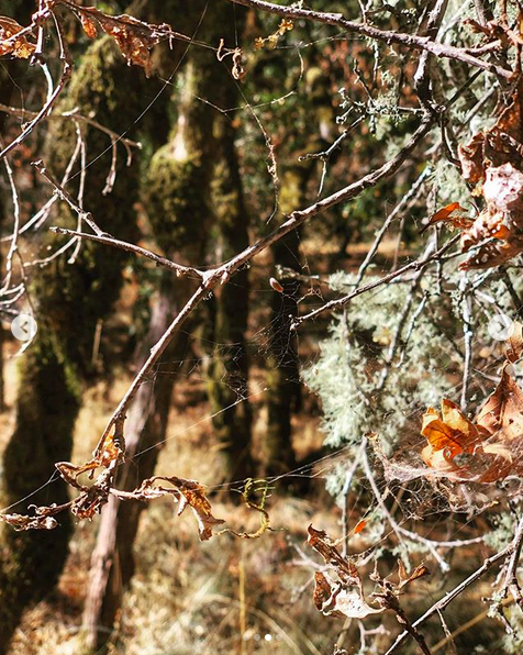 A photograph of a spider web spun between bare branches in the middle of the woods.