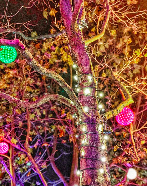 A photo of a small tree with some dead leaves, and covered in colorful holiday lights, taken at night with a light rain.