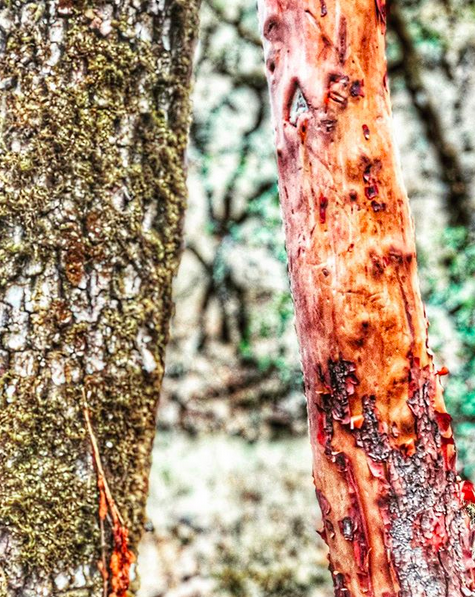 A close up photo of two small tree trunks.
