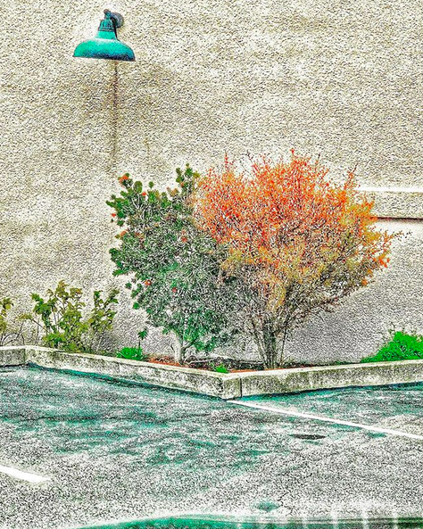 An orange and a green tree in the corner of a parking lot with small green bushes against a grey concrete wall.