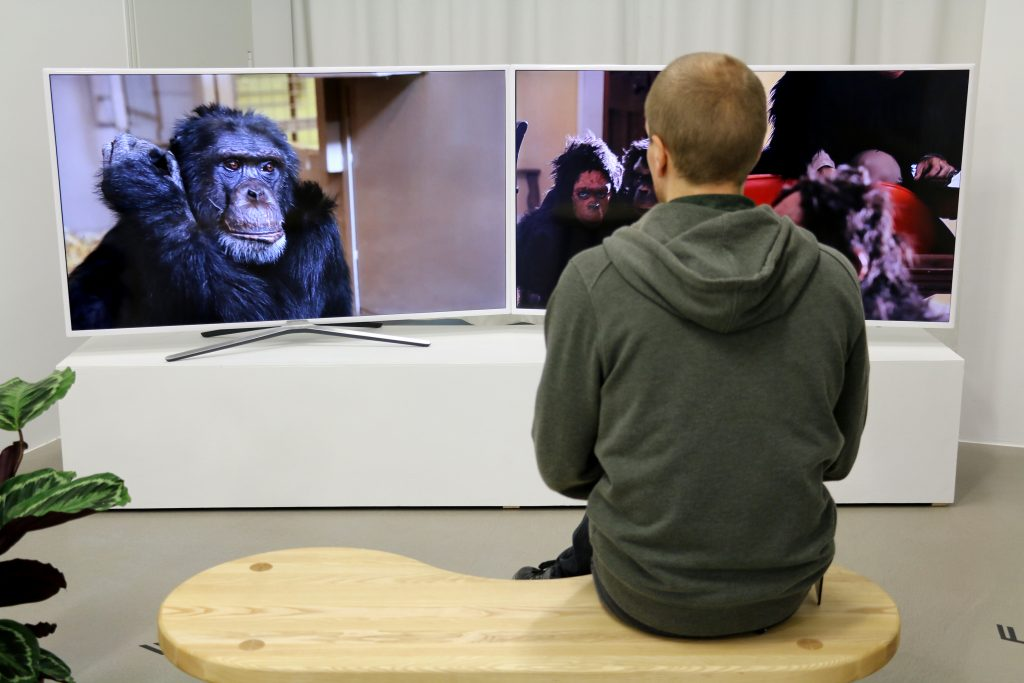 Rachel Mayeri,  Primate Cinema: Apes as Family  (2012). InstallatioN shot: Aage A. Mikalsen / Kunsthall Trondheim