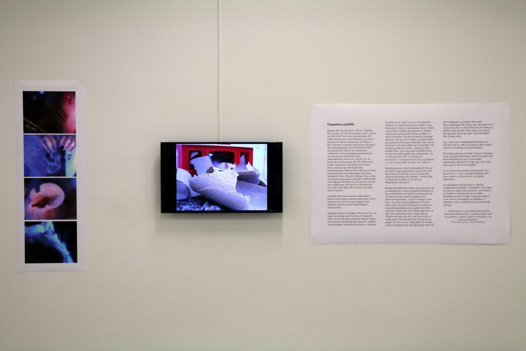 Kathy High,  Rat Love Manifesto  (2004-2006). Installation shot: Aage A. Mikalsen / Kunsthall Trondheim