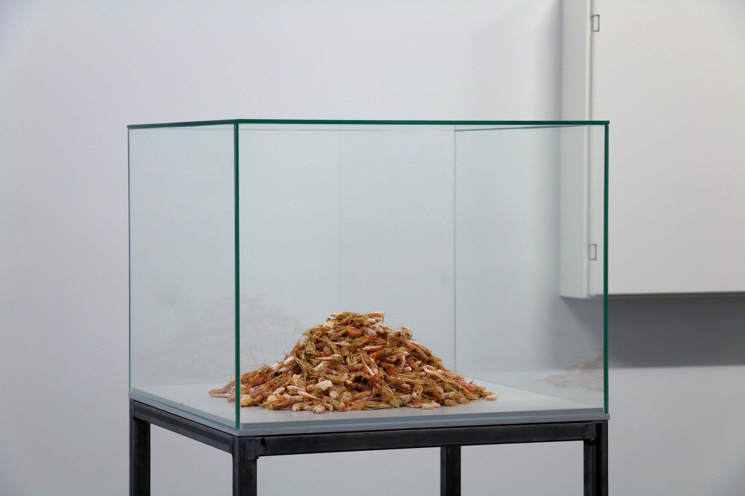 FRAUD (Fran Gallardo & Audrey Samson),  Shrimping under Working Conditions  (2017), DETAIL. INSTALLATIOn shot: Aage A. Mikalsen / Kunsthall Trondheim