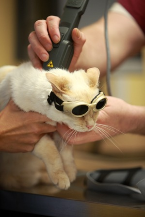 Beverly wears eye protection during her laser therapy treatment.